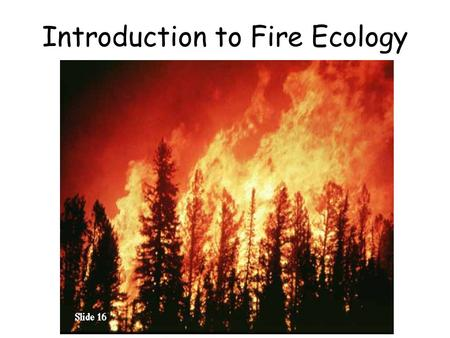 "Introduction to Fire Ecology. Consider the statement: ""Fire is bad"" – What do you think? Why? – Can you think of examples of when fire is good and bad?"