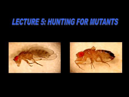 "A mutant is different than ""normal"". The mutant characteristic is passed on to the next generation."