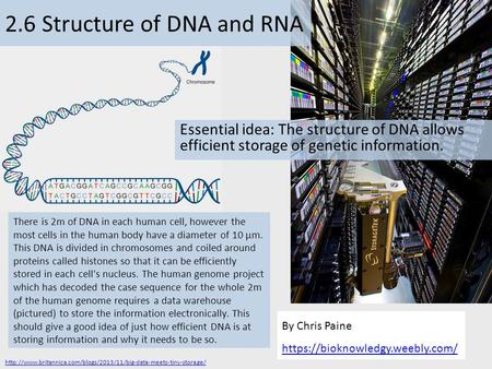 By Chris Paine https://bioknowledgy.weebly.com/ 2.6 Structure of DNA and RNA Essential idea: The structure of DNA allows efficient storage of genetic information.