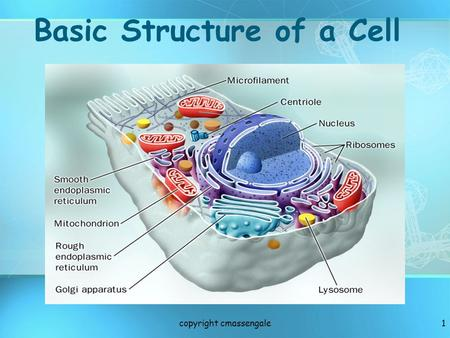 1 Basic Structure of a Cell copyright cmassengale.