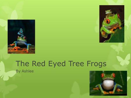 The Red Eyed Tree Frogs By Ashlee. The Characteristics Of The Red Eyed Tree Frog  These are the characteristics of a Red Eyed Tree Frog.  Big red eyes,