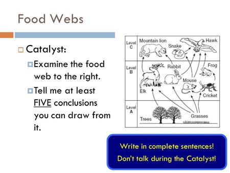 Food Webs Write in complete sentences! Don't talk during the Catalyst!  Catalyst:  Examine the food web to the right.  Tell me at least FIVE conclusions.