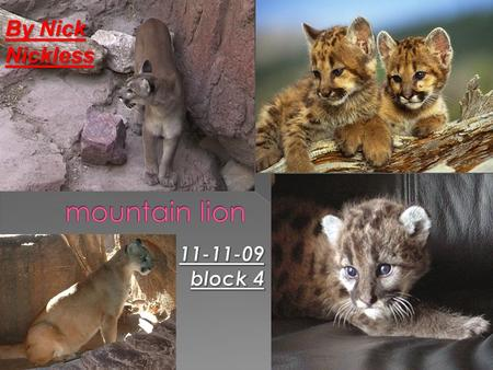 By Nick Nickless  om/videos/natures- perfect-predators- mountain-lion.html.