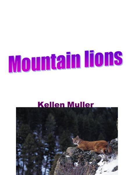 Kellen Muller. 2 Table of Contents Pg3 How far do they jump? Pg4 How much do they have to eat stay alive? Pg5 How fast do they run? Pg6 What is the limit.