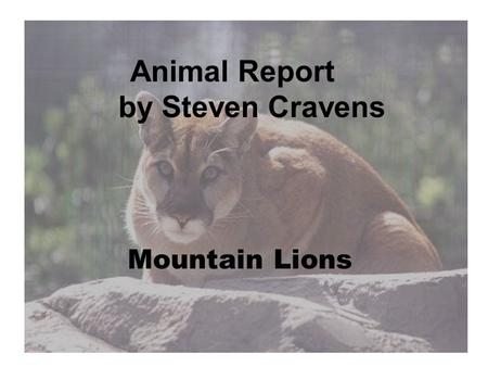 Animal Report by Steven Cravens Mountain Lions. Introduction You think a person can jump high on a trampoline, the mountain lion can jump 20 feet in the.