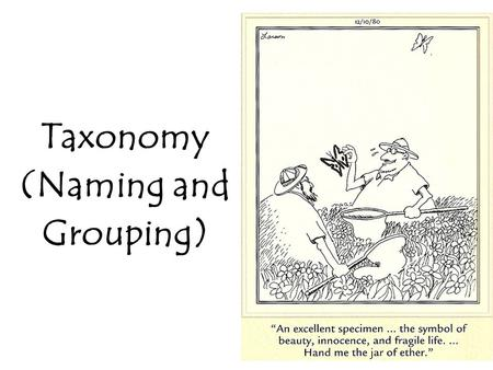 Taxonomy (Naming and Grouping). Why is a naming system important? Have you seen a… Florida panther? Cougar? Mountain lion? Catamount? Puma? They are all.