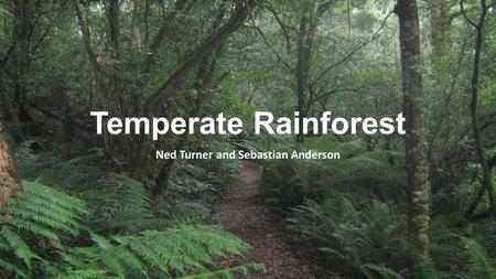 Temperate Rainforest Ned Turner and Sebastian Anderson.