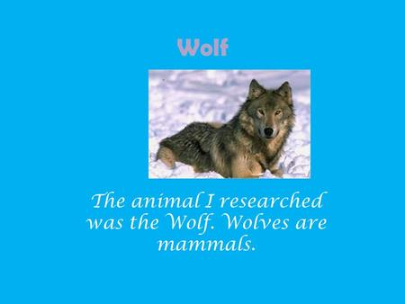 Wolf The animal I researched was the Wolf. Wolves are mammals.