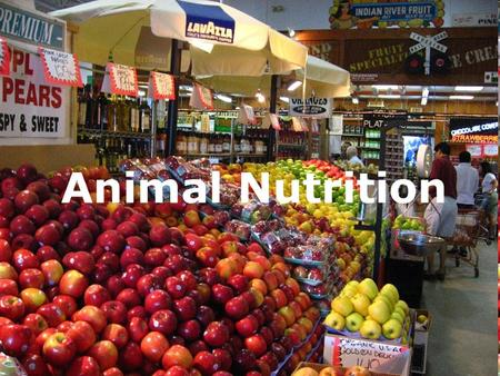 Animal Nutrition. Adequate Diet 1.Fuel Chemical Energy (ATP) 2.Organic Raw Materials Biosynthesis 3.Essential Nutrients Substances (e.g. vitamins) that.