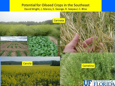 Potential for Oilseed Crops in the Southeast David Wright, J. Marois, S. George, R. Seepaul, C. Bliss Carinata Canola Camelina.