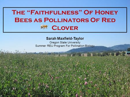 "The ""Faithfulness"" Of Honey Bees as Pollinators Of Red Clover Sarah Maxfield-Taylor Oregon State University Summer REU Program For Pollination Biology."