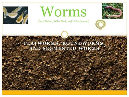 FLATWORMS, ROUNDWORMS, AND SEGMENTED WORMS Worms (Lexy Bishop, Kellie Black, and Violet Lawson)