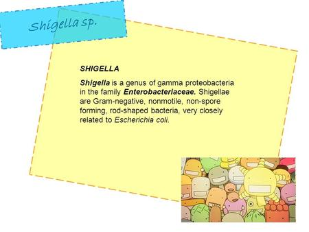 SHIGELLA Shigella is a genus of gamma proteobacteria in the family Enterobacteriaceae. Shigellae are Gram-negative, nonmotile, non-spore forming, rod-shaped.