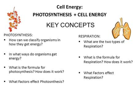 Cell Energy: PHOTOSYNTHESIS + CELL ENERGY PHOTOSYNTHESIS:  How can we classify organisms in how they get energy?  In what ways do organisms get energy?