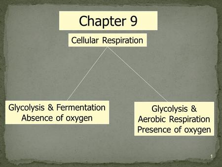 Cellular Respiration Glycolysis & Fermentation Absence of oxygen Glycolysis & Aerobic Respiration Presence of oxygen Chapter 9 1.