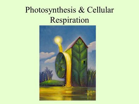 Photosynthesis & Cellular Respiration. Objectives 1.Identify the reactants and products of photosynthesis and cellular respiration 2.Understand the.