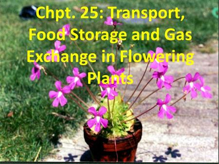 Chpt. 25: Transport, Food Storage and Gas Exchange in Flowering Plants.