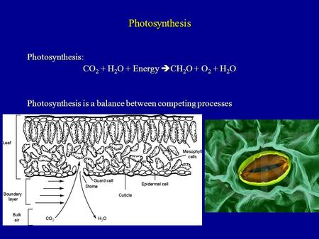 Photosynthesis Photosynthesis: CO 2 + H 2 O + Energy  CH 2 O + O 2 + H 2 O Photosynthesis is a balance between competing processes.