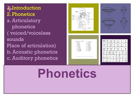 Phonetics Introduction Phonetics Articulatory phonetics