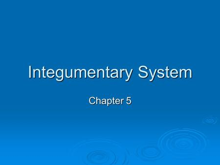 Integumentary System Chapter 5. Learner Objectives  To analyze the structural and functional relationships of the tissues within the integument.  To.
