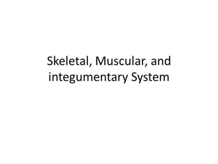 Skeletal, Muscular, and integumentary System. KEY CONCEPT The skeletal system includes bones and tissues that are important for supporting, protecting,