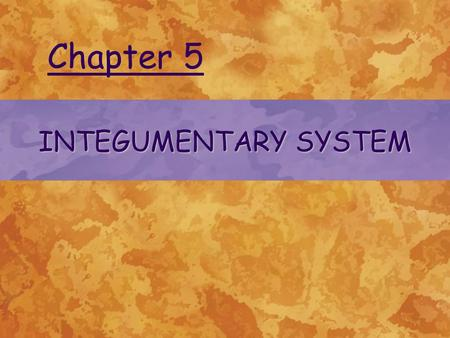INTEGUMENTARY SYSTEM Chapter 5. THE INTEGUMENT AND ITS RELATIONSHIP TO MICROORGANISMS Most skin bacteria are associated with hair follicles or sweat glands.