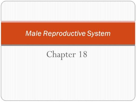 Chapter 18 Male Reproductive System. Function of the Male Reproductive System To make sperm: the male sex cell To fertilize the egg cell: the female sex.