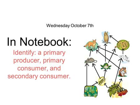 Wednesday October 7th In Notebook: Identify: a primary producer, primary consumer, and secondary consumer.