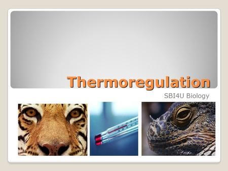 Thermoregulation SBI4U Biology.