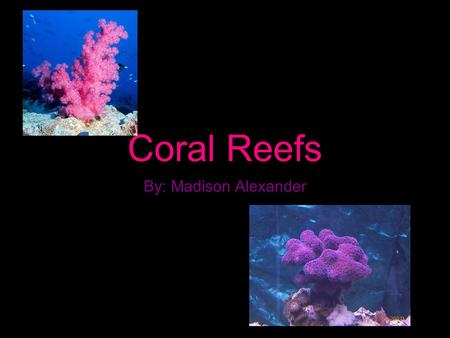 Coral Reefs By: Madison Alexander. Marine ecosystem depend on the coral reefs Rain forests of the sea Occupy as little as 1% of the ocean floor Keep ocean.