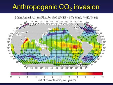 Anthropogenic CO 2 invasion. I. Anthropogenic CO 2 uptake.