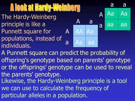 The Hardy-Weinberg principle is like a Punnett square for populations, instead of individuals. A Punnett square can predict the probability of offspring's.