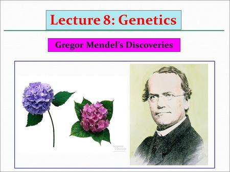 Gregor Mendel's Discoveries Lecture 8: Genetics. He was born in 1822 in Austria النمسا. In 1854, Mendel began his classic experiments with the garden.