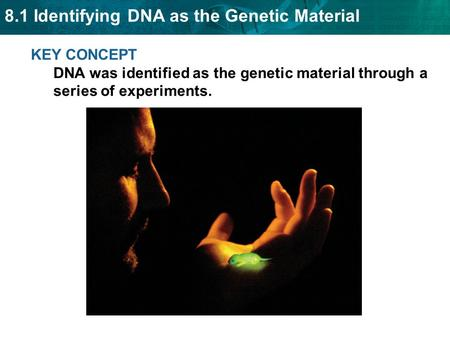 8.1 Identifying DNA as the Genetic Material KEY CONCEPT DNA was identified as the genetic material through a series of experiments.