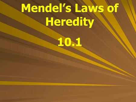 "Mendel's Laws of Heredity 10.1. Gregor Mendel An Austrian monk who studied heredity through pea plants ""Father of Genetics"""