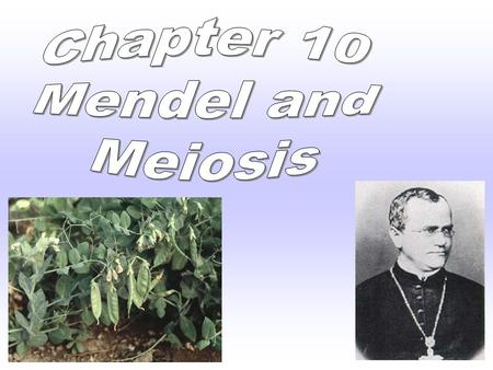 I. Gregor Mendel A. Mendel performed 1 st experiments in heredity -the passing on of characteristics from parents to offspring. B. Mendel's work founded.
