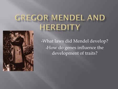 What laws did Mendel develop? How do genes influence the development of traits?
