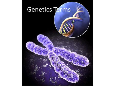 "Genetics Terms. Genetics Heredity – passing of traits from one generation to the next. Genetics – ""study of heredity"" Traits – inherited characteristics."