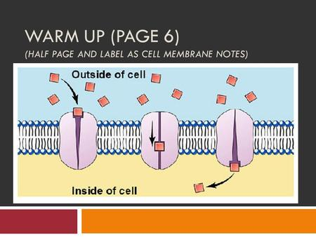 WARM UP (PAGE 6) (HALF PAGE AND LABEL AS CELL MEMBRANE NOTES)