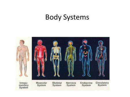 Body Systems. LEANN FLETCHER Michael Fletcher was in the bathroom when he heard the gunshot. Fletcher ran out of the bathroom and found his wife, Leann,