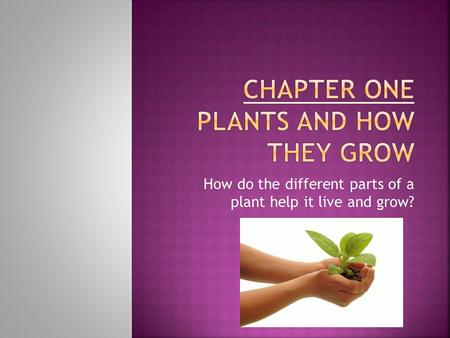 How do the different parts of a plant help it live and grow?