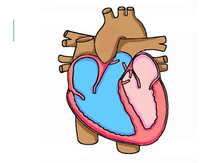 When blood enters the heart it enters through the andvena cava into the. Once it is filled the blood passes through the valve into the. Blood goes through.