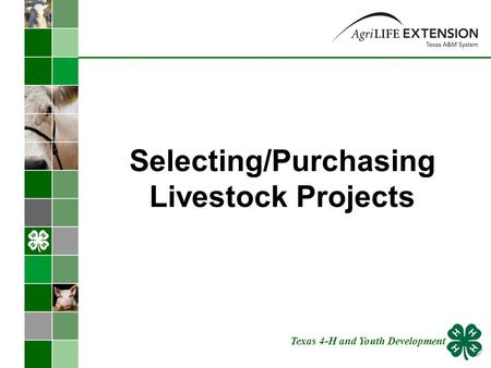 Selecting/Purchasing Livestock Projects Texas 4-H and Youth Development.