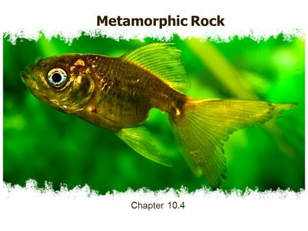 Metamorphic Rock Chapter 10.4. Metamorphic Rock 1.Metamorphic Rock a.Rock formed from other rocks as a result of intense heat, pressure, or chemical processes.
