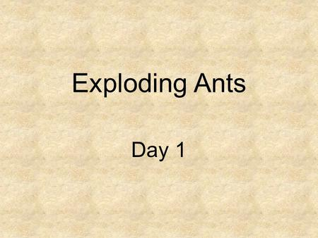 Exploding Ants Day 1. Concept Talk How do animals adapt to survive?