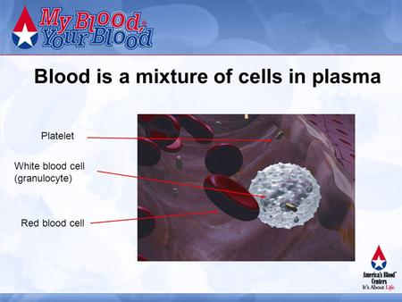 Blood is a mixture of cells in plasma Red blood cell Platelet White blood cell (granulocyte)