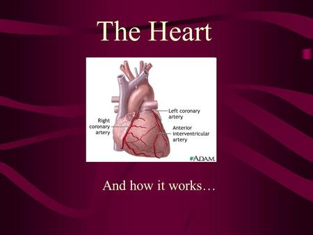 The Heart And how it works….