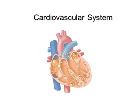 Cardiovascular System. The Cardiovascular System Functions of the Cardiovascular System: Cardiovascular System Components: