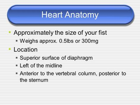 Heart Anatomy Approximately the size of your fist  Weighs approx. 0.5lbs or 300mg Location  Superior surface of diaphragm  Left of the midline  Anterior.