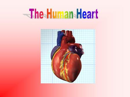 Aim: How is blood circulated in the human heart? I. Heart Circulation A. Heart is divided into 2 sides (left and right) 1. Left side contains oxygenated.